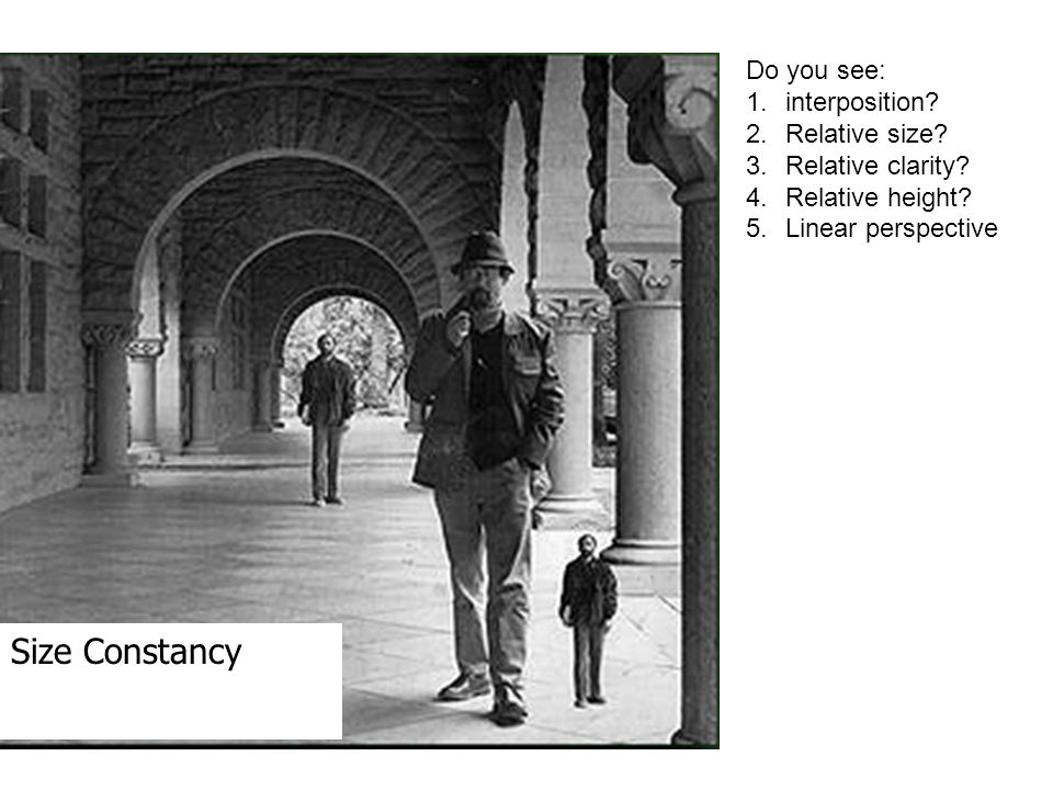 size constancy This group's achievements clarified the neural basis of size constancy and are  expected to be helpful in improving 3d image-recognition.