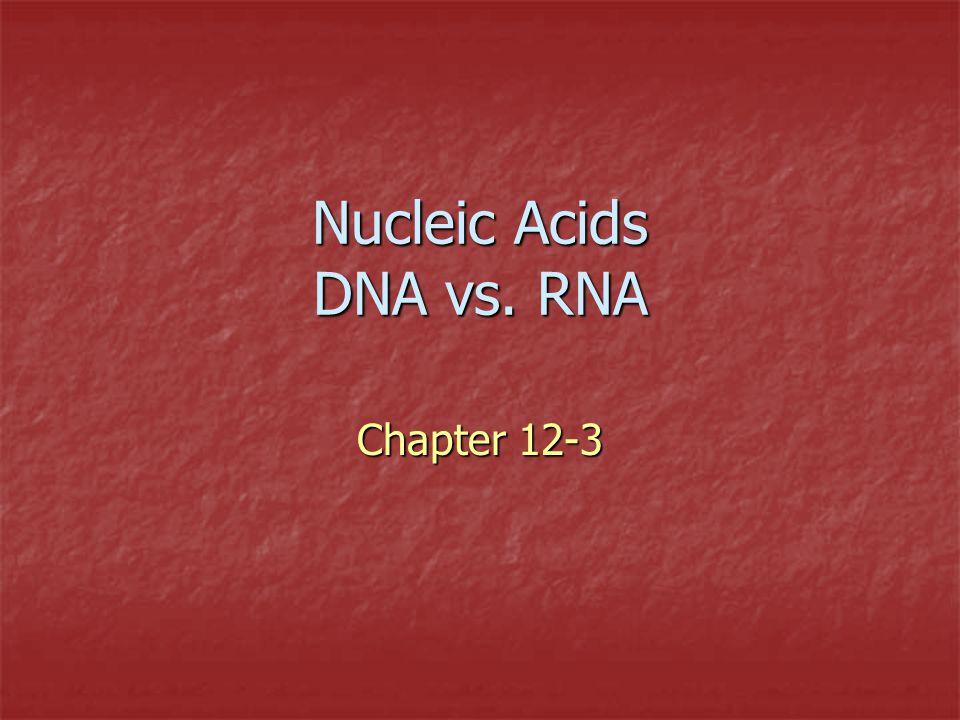 Nucleic Acids DNA vs. RNA