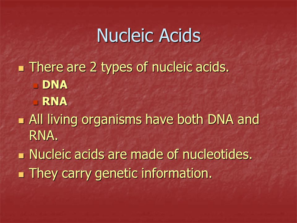 Nucleic Acids There are 2 types of nucleic acids.