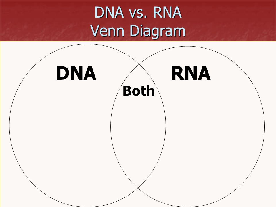 DNA vs. RNA Venn Diagram DNA RNA Both