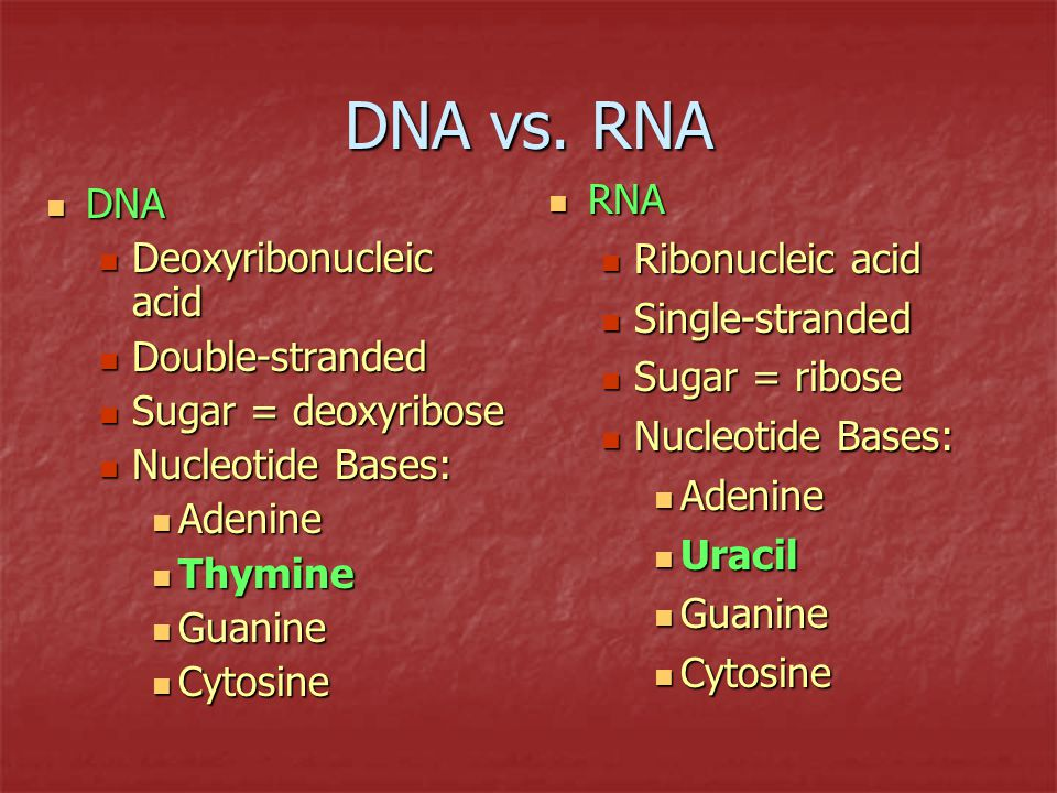 nucleic acids dna vs  rna