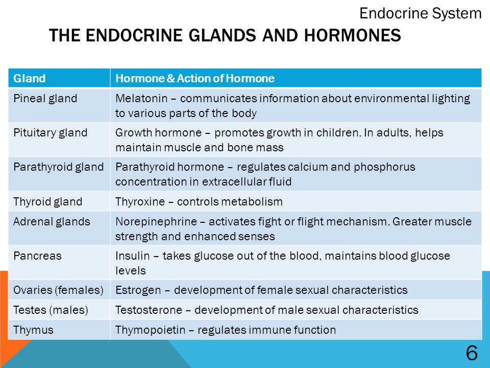 Difference Between Endocrine and Nervous System