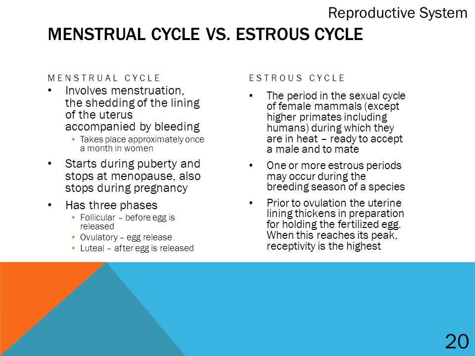 reproductive cycle in mammals pdf