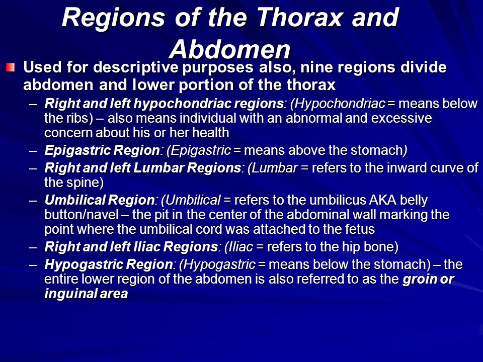 Regions of the Thorax and Abdomen