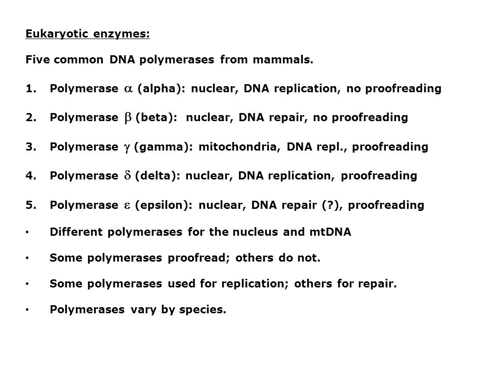 Eukaryotic enzymes: Five common DNA polymerases from mammals. Polymerase  (alpha): nuclear, DNA replication, no proofreading.