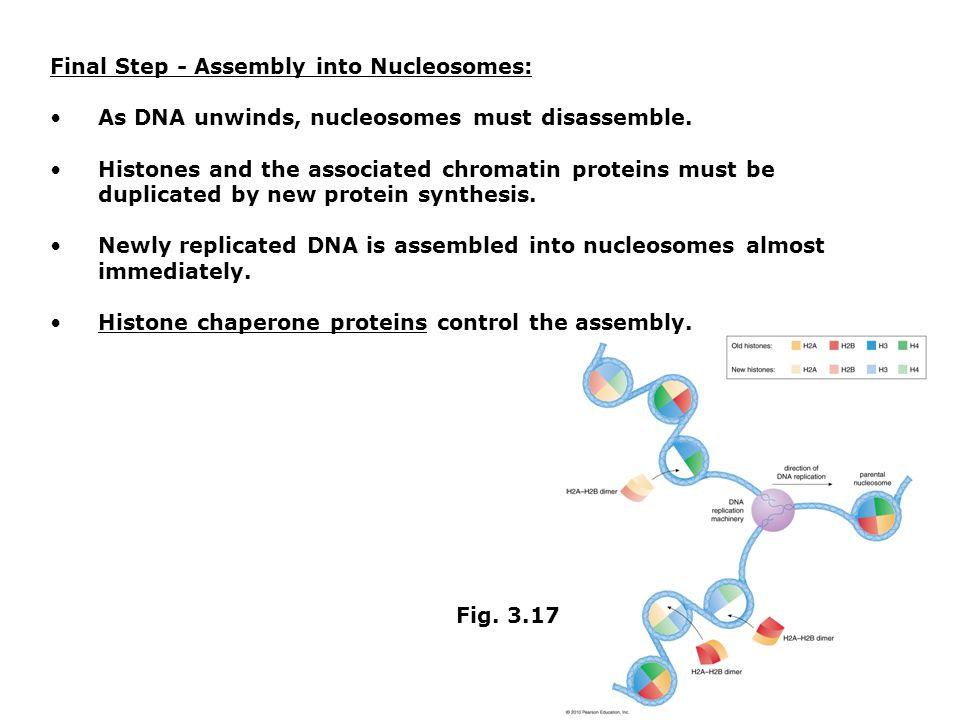 Final Step - Assembly into Nucleosomes: