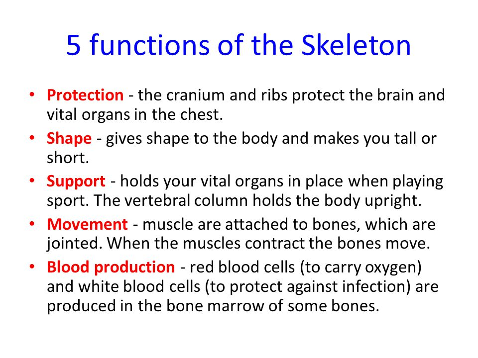 functions and functions of bones and muscles Learn more about the anatomy and function of bones, joints, muscles, ligaments  and tendons in dogs.