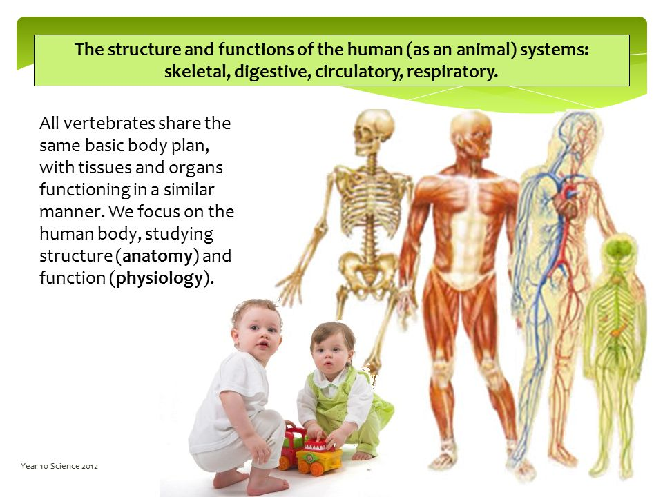 Biology Year 10 Human Biology Year 10 Science ppt video online download