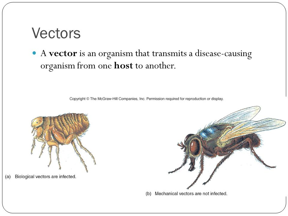 Vectors A vector is an organism that transmits a disease-causing organism from one host to another.