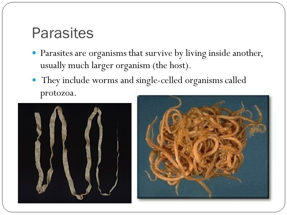 Parasites Parasites are organisms that survive by living inside another, usually much larger organism (the host).