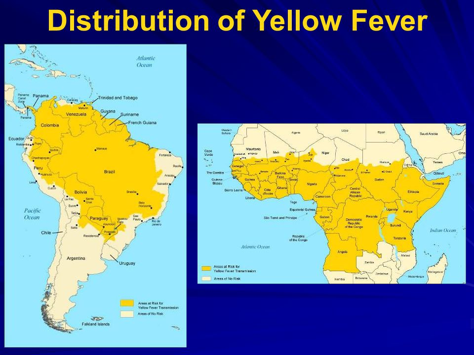 a brief history of yellow fever essay Yellow fever essay outline essay by bananahead , junior high, 9th grade , a+ , september 2006 download word file , 1 pages download word file , 1 pages 50 1 votes.