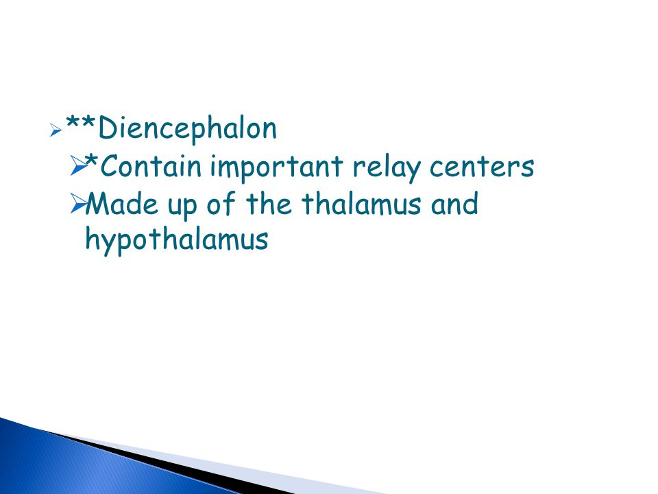 **Diencephalon *Contain important relay centers Made up of the thalamus and hypothalamus