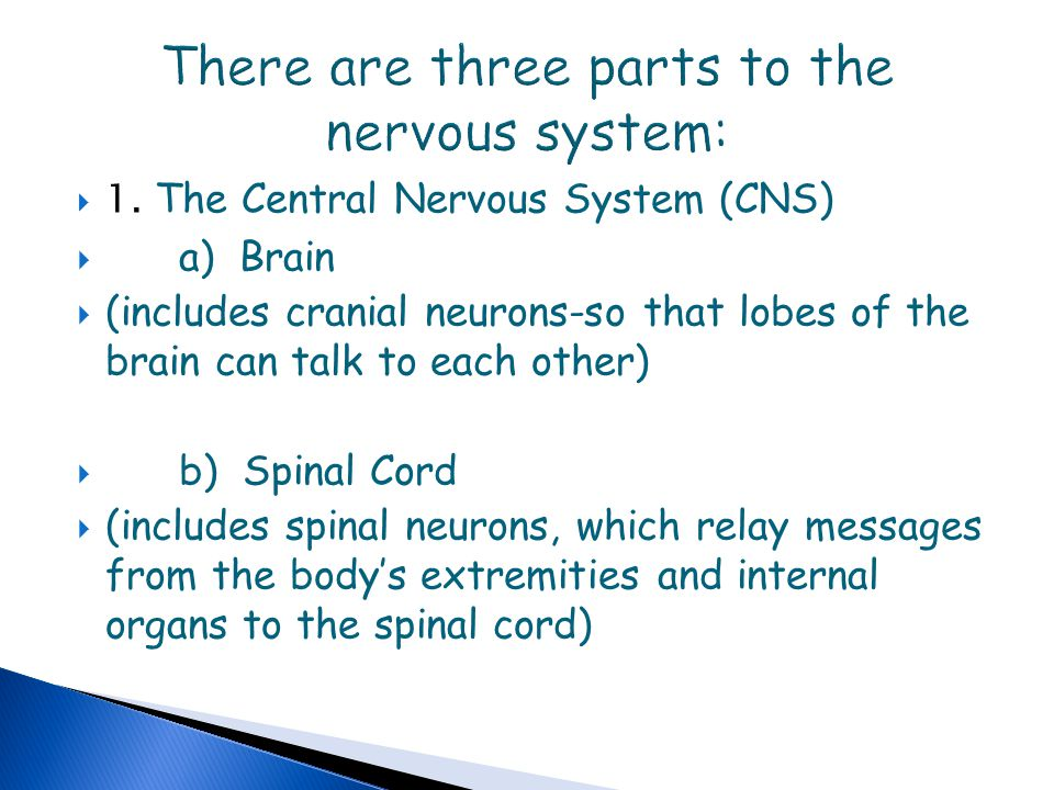 There are three parts to the nervous system: