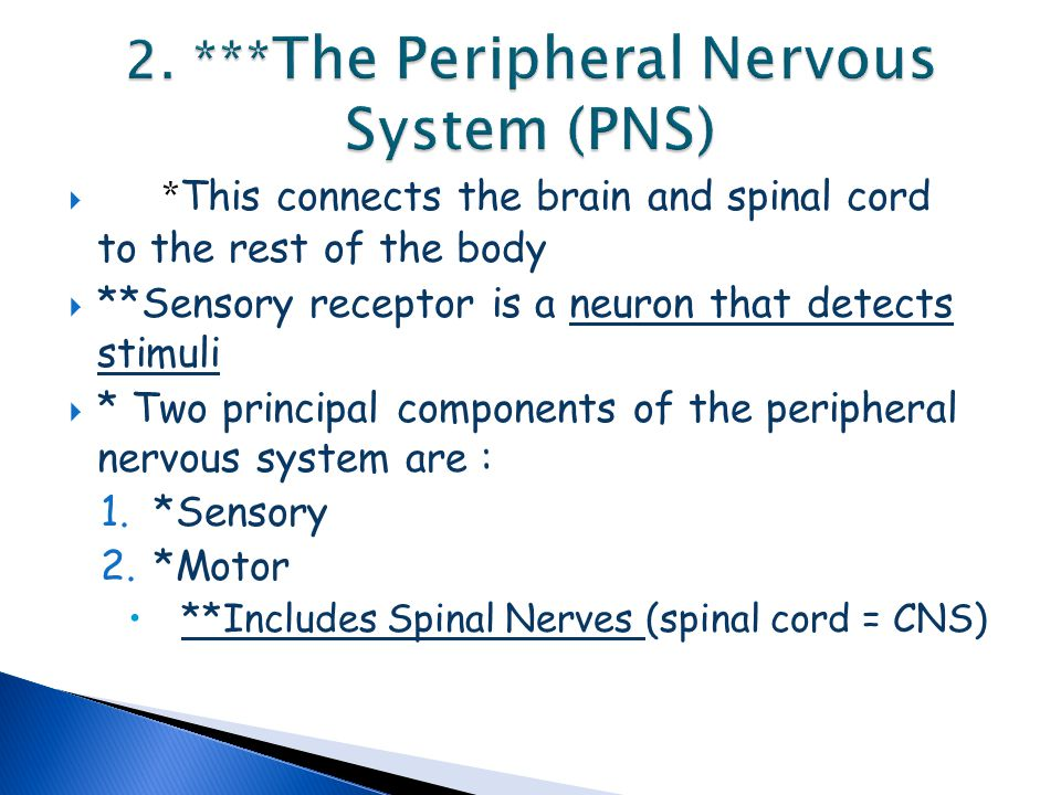 2. ***The Peripheral Nervous System (PNS)