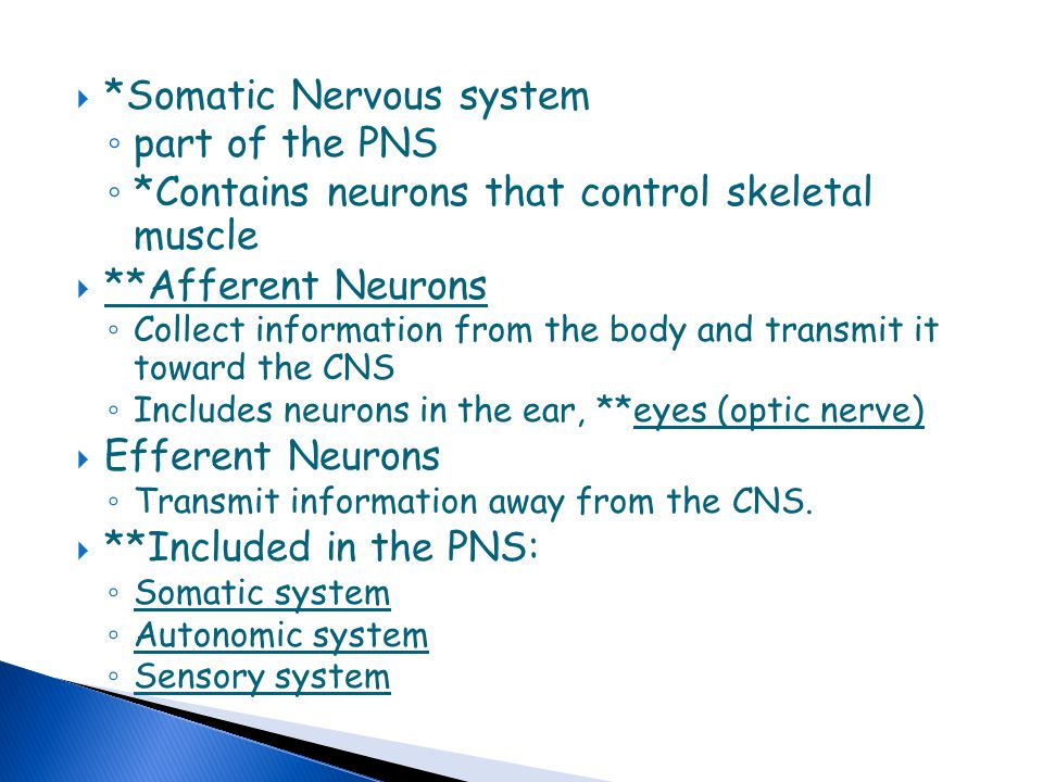 *Somatic Nervous system part of the PNS