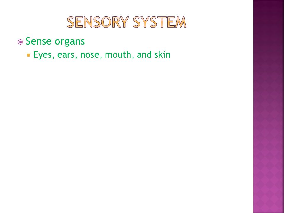 Sensory system Sense organs Eyes, ears, nose, mouth, and skin