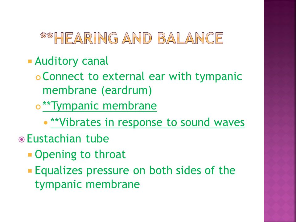 **Hearing and Balance Auditory canal