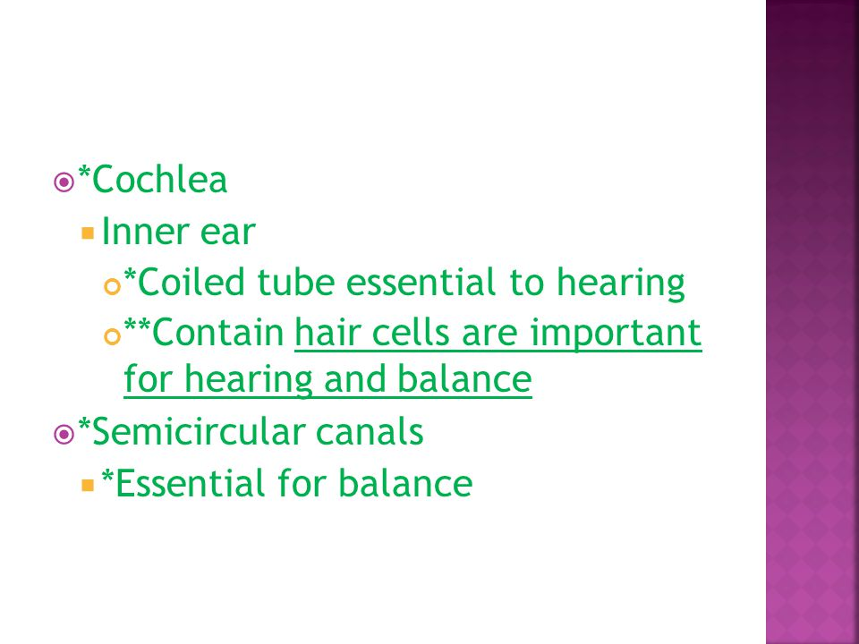 *Cochlea Inner ear. *Coiled tube essential to hearing. **Contain hair cells are important for hearing and balance.