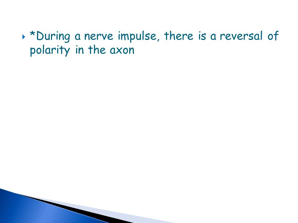 *During a nerve impulse, there is a reversal of polarity in the axon