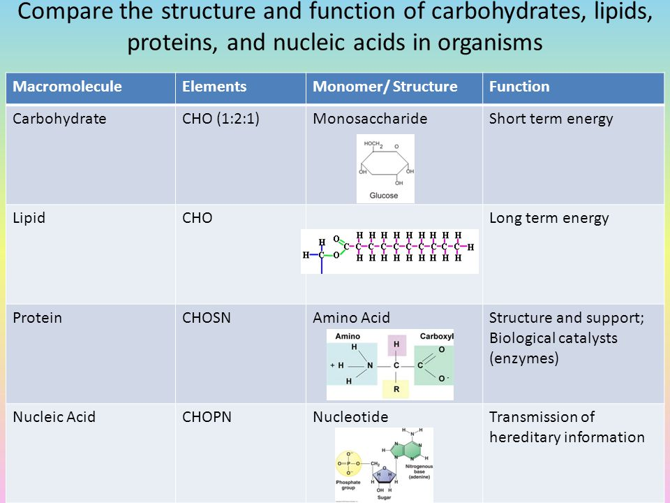Carbohydrates proteins lipids and nucleic acid