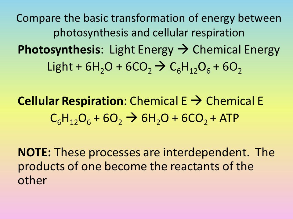 photosynthesis and cellular respiration essay question This student essay consists of approximately 3 pages of analysis of photosynthesis versus cellular respiration.
