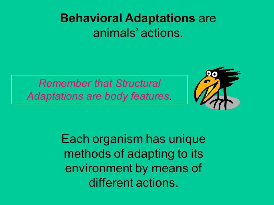 Have You Ever Wondered How Animals Are Able To Survive In