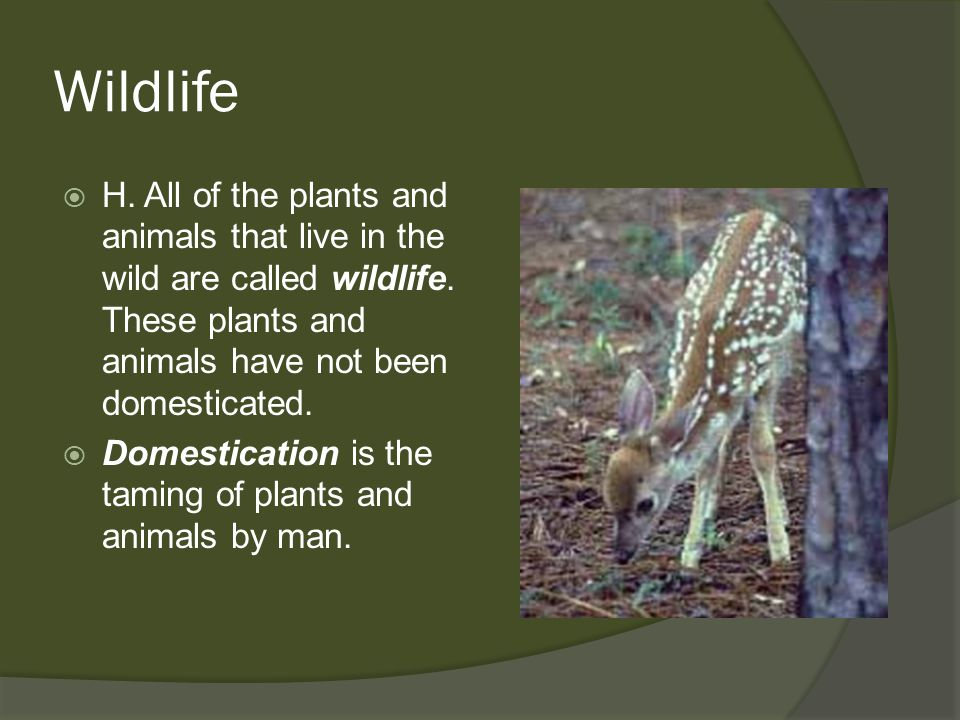 Wildlife H. All of the plants and animals that live in the wild are called wildlife. These plants and animals have not been domesticated.