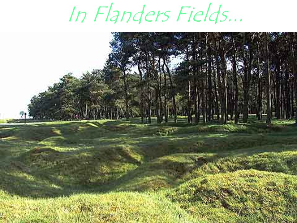 In Flanders Fields...