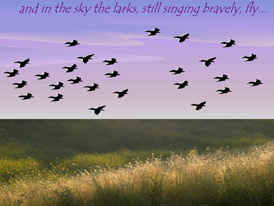 and in the sky the larks, still singing bravely, fly...