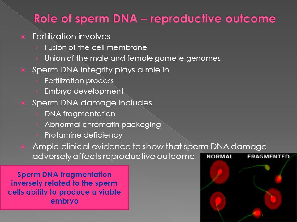Role of sperm DNA – reproductive outcome