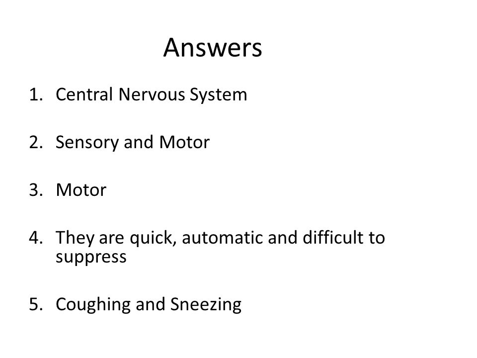 nervous system questions and answers pdf