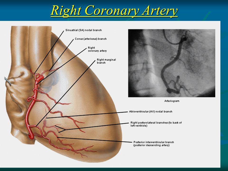 how to coronary arteris return blood