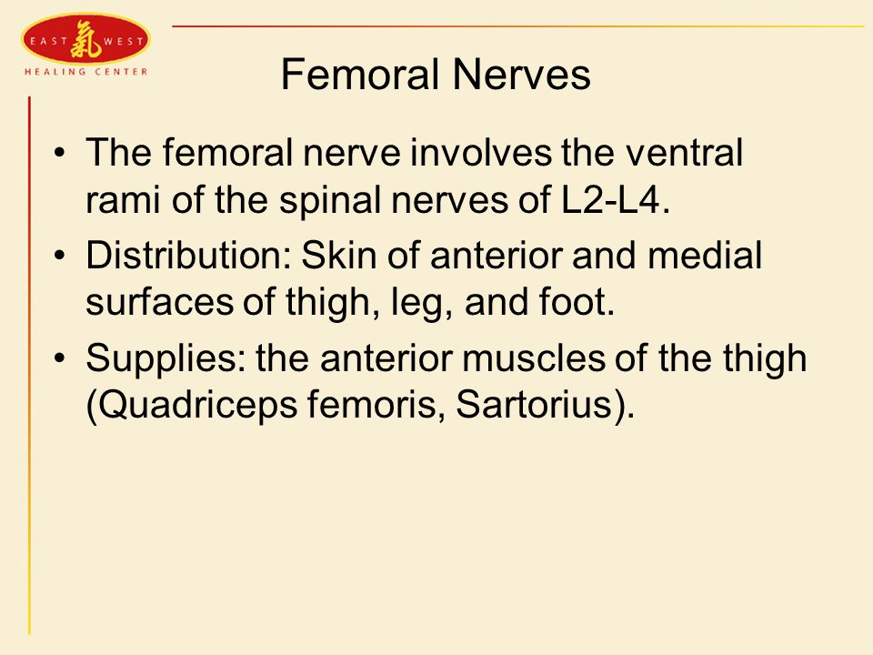 pathology and tcm treatment of the herniated lumbar disc - ppt, Muscles