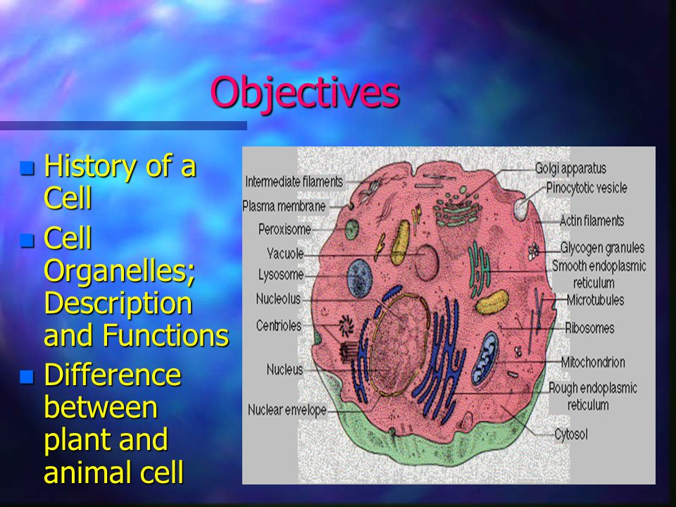 Cells and their Organelles ppt download – Cells and Their Organelles Worksheet