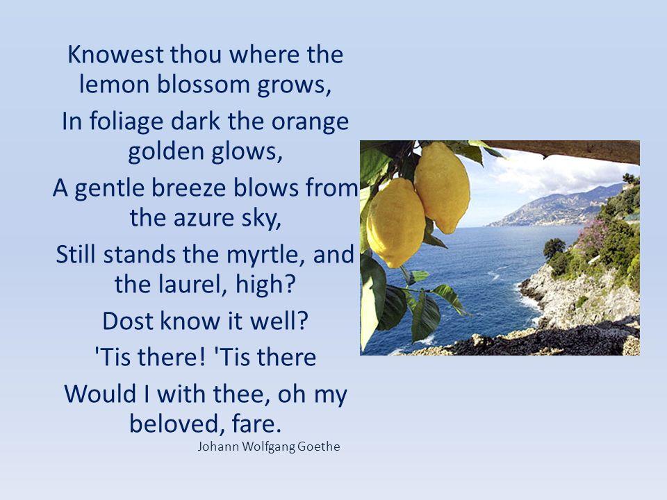 Knowest thou where the lemon blossom grows,
