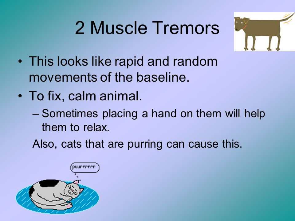 2 Muscle Tremors This looks like rapid and random movements of the baseline. To fix, calm animal.