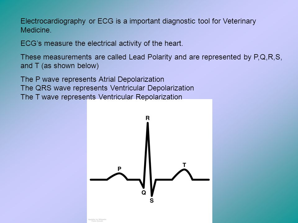Electrocardiography or ECG is a important diagnostic tool for Veterinary Medicine.