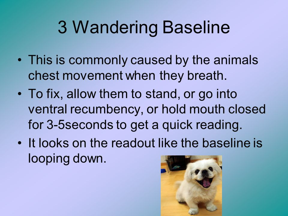 3 Wandering Baseline This is commonly caused by the animals chest movement when they breath.