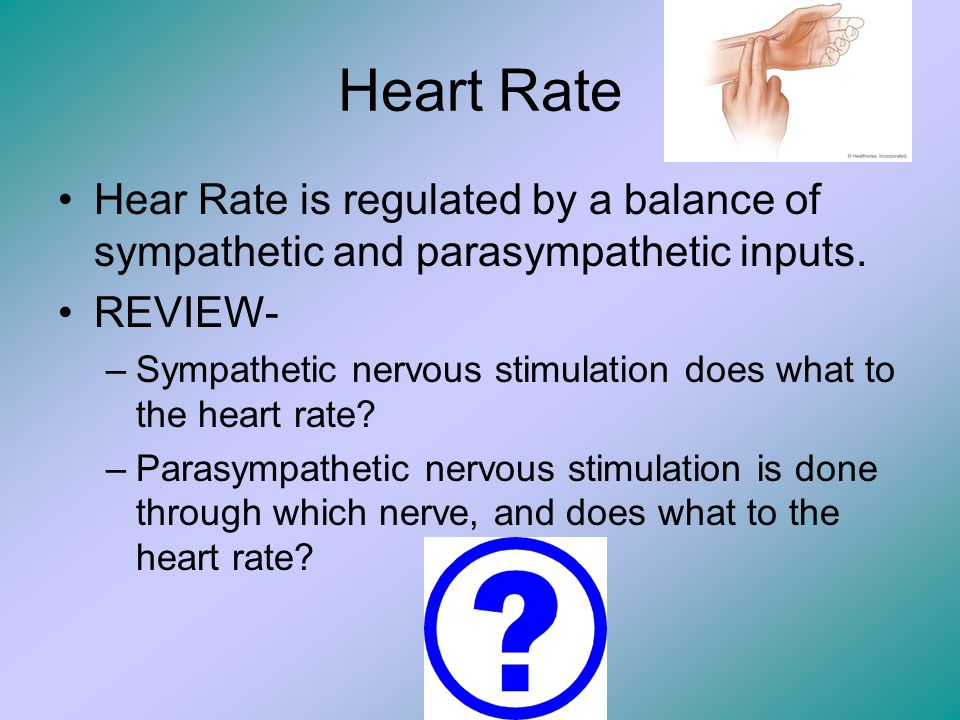 Heart Rate Hear Rate is regulated by a balance of sympathetic and parasympathetic inputs. REVIEW-