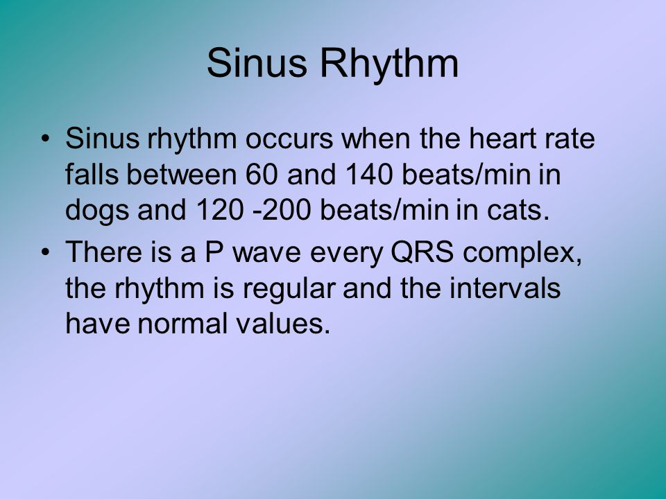 Sinus Rhythm Sinus rhythm occurs when the heart rate falls between 60 and 140 beats/min in dogs and 120 -200 beats/min in cats.