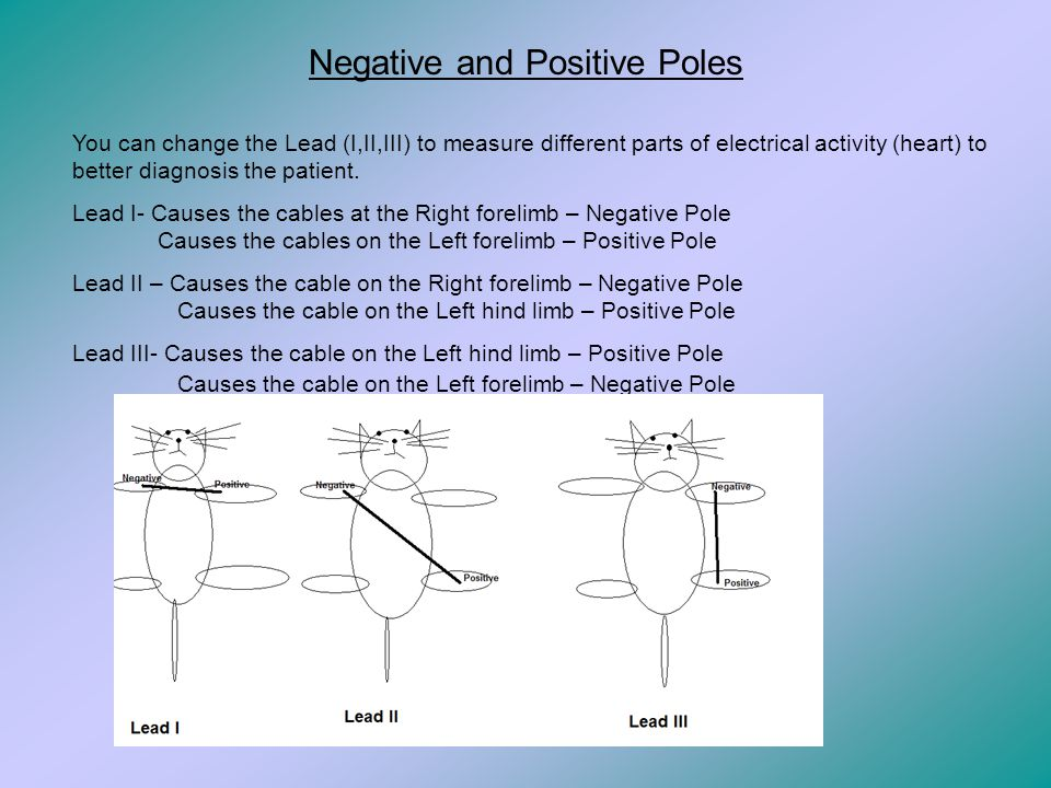 Negative and Positive Poles