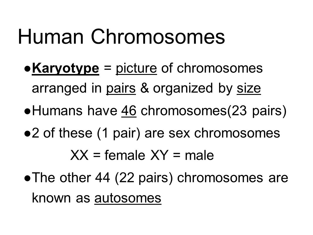 Human Chromosomes Karyotype = picture of chromosomes arranged in pairs & organized by size. Humans have 46 chromosomes(23 pairs)