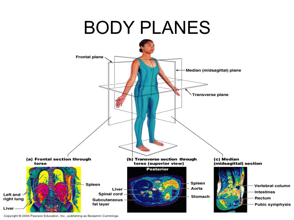 Human anatomy planes of the body