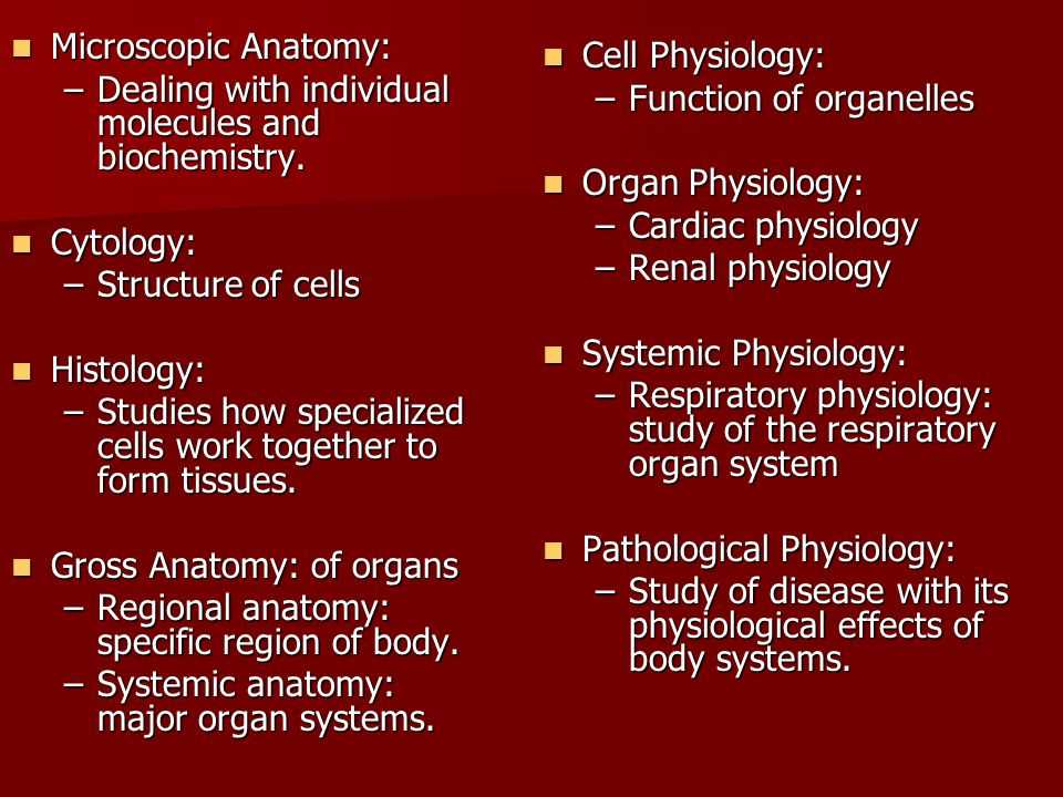 Ausgezeichnet Why Do We Study Anatomy And Physiology Together Bilder ...