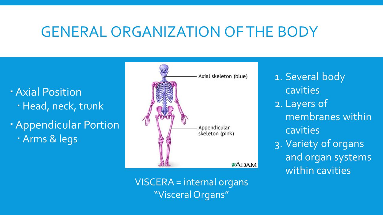axial skeleton lab 1