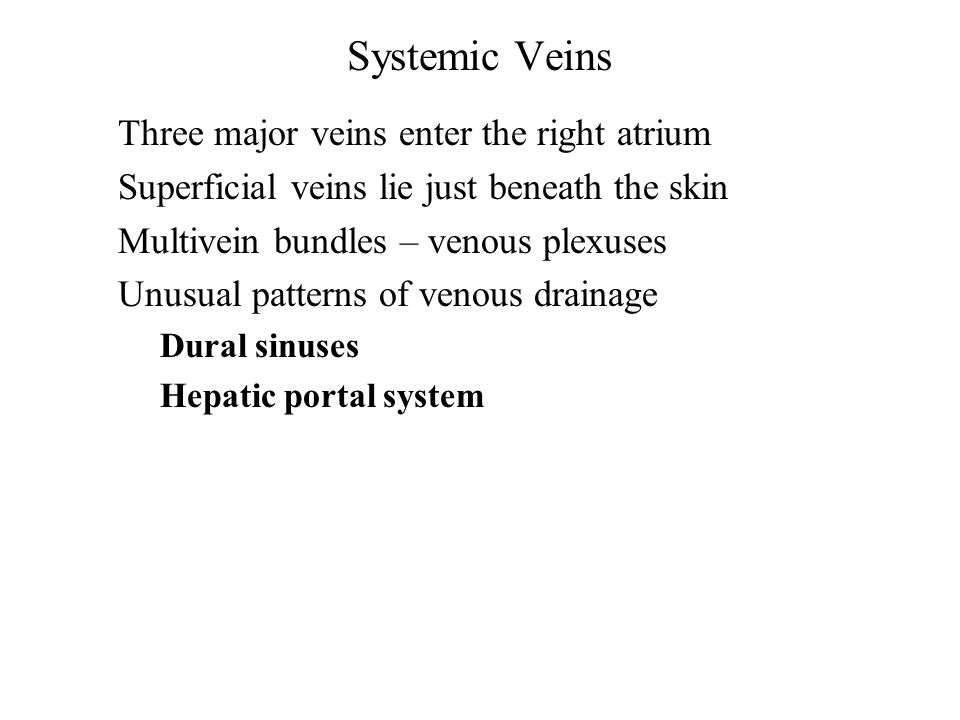 Systemic Veins Three major veins enter the right atrium