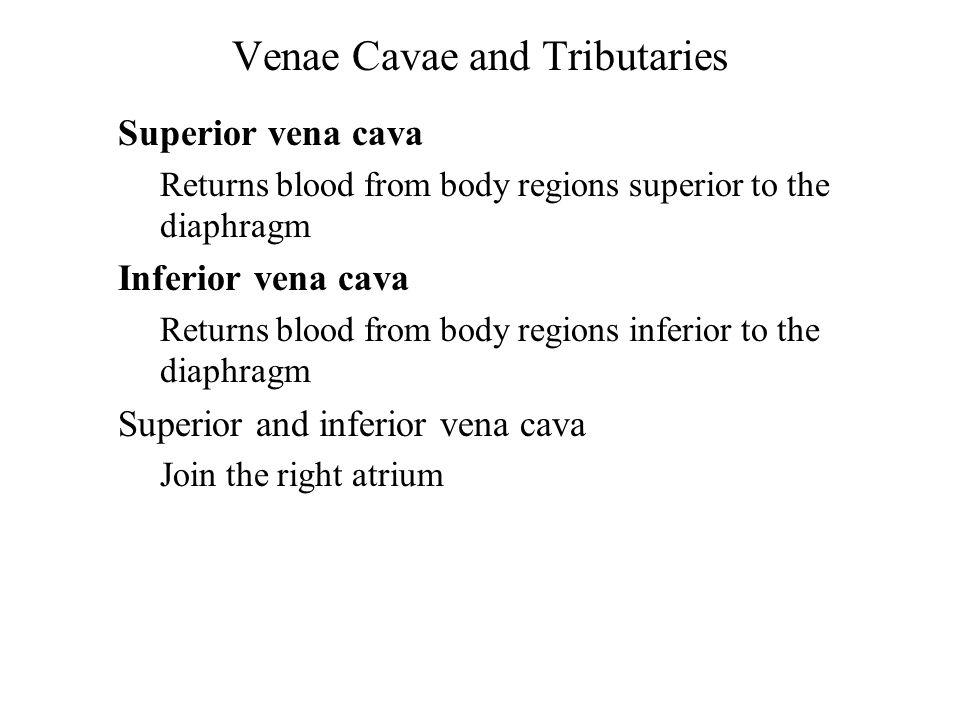 Venae Cavae and Tributaries