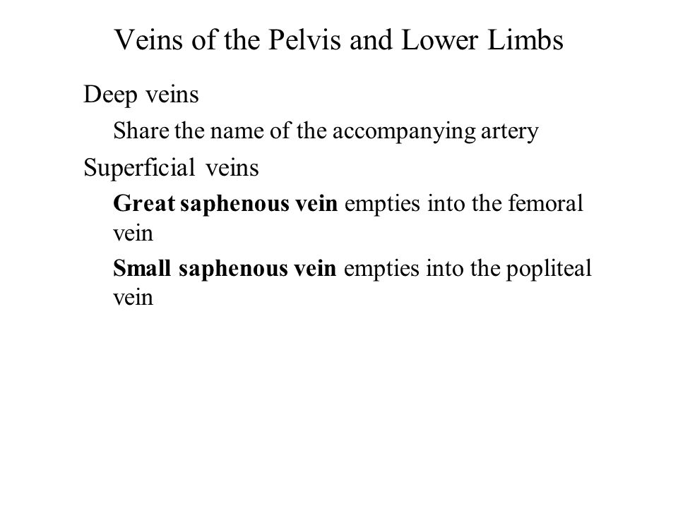 Veins of the Pelvis and Lower Limbs