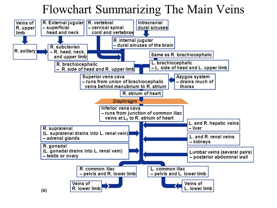 Flowchart Summarizing The Main Veins