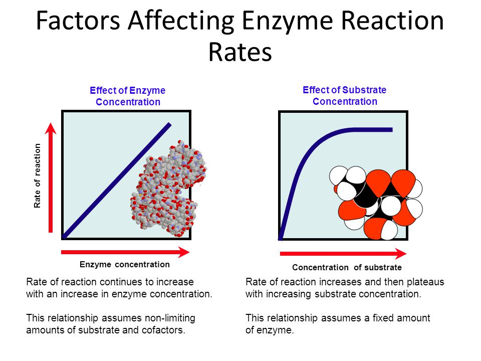 effect of substrate concentration on rate It is evident that errors in determining enzyme concentration have little effect upon parameter determination, except, of course, in respect of δg‡ cat, which is reduced as the model attempts to relate the reduced enzyme concentration to the observed rates of reaction.